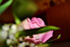 A rosa do rosa foi dada à pessoa a mais bonita nunca fotografia de stock royalty free