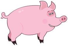 Rosa do porco Fotografia de Stock Royalty Free
