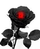 Rosa do preto com coração Imagens de Stock Royalty Free