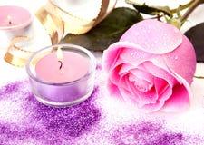 Rosa do rosa imagem de stock