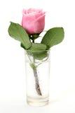 Rosa do rosa foto de stock royalty free