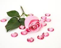 Rosa do rosa imagem de stock royalty free