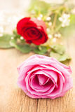 Rosa do rosa foto de stock royalty free