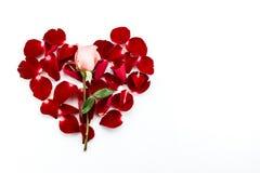 A rosa do rosa e as pétalas cor-de-rosa vermelhas que formam o coração dão forma Fotos de Stock