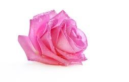 Rosa do rosa em gotas da água Foto de Stock Royalty Free