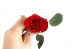 Rosa do vermelho Fotos de Stock