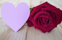 Rosa 14 do vermelho Imagens de Stock Royalty Free