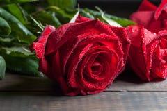 Rosa do vermelho com o close up do extremo das gotas de água Fotos de Stock