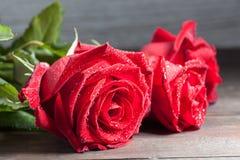 Rosa do vermelho com o close up do extremo das gotas de água Foto de Stock