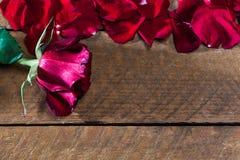 Rosa do vermelho com pétalas, na placa de madeira imagens de stock royalty free