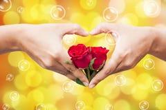 rosa do vermelho da posse da mão fotografia de stock royalty free