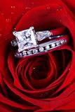 Rosa do vermelho e anéis de diamante imagem de stock