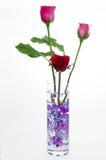 Rosa do vermelho e do rosa no vidro Imagem de Stock Royalty Free