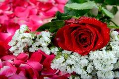 Rosa do vermelho e flores brancas nas pétalas cor-de-rosa dispersadas Fotos de Stock