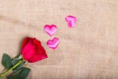 A rosa do vermelho em um despedida e aleatoriamente o cetim cor-de-rosa dispersado ouve-se Imagens de Stock
