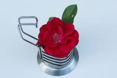 Rosa do vermelho em um vaso do metal imagens de stock