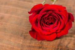 Rosa do vermelho em uma tabela de madeira Imagem de Stock