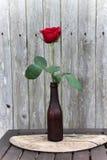 Rosa do vermelho na garrafa de vidro foto de stock