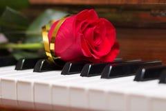 Rosa do vermelho no teclado de piano Imagem de Stock