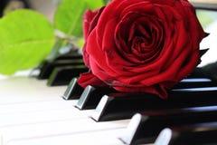 Rosa do vermelho no teclado de piano Fotos de Stock Royalty Free