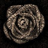 Rosa dos crânios e dos ossos Fotos de Stock Royalty Free