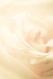 Rosa dulce del pétalo, en estilo suave del color y de la falta de definición Foto de archivo