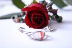 Rosa e anel borrado Fotos de Stock