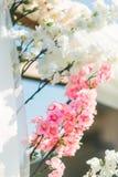 Rosa e bianco di Sakura Flower Plastic Beautiful Background Immagini Stock Libere da Diritti