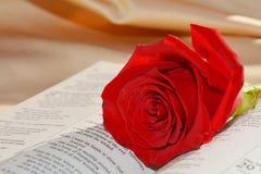 Rosa e bibbia immagini stock
