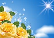 Rosa e bolhas Imagem de Stock Royalty Free