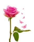 Rosa e borboleta Imagem de Stock
