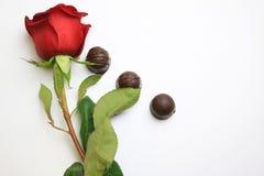 Rosa e cioccolato Fotografie Stock Libere da Diritti