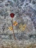 Rosa e coração, abstratos Imagens de Stock Royalty Free