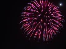 Rosa e explosão roxa do fogo de artifício no céu preto no quarto de julho imagens de stock royalty free