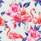 Rosa e fenicotteri rosa Immagine Stock