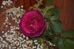 Rosa e flores decorativas brancas Imagens de Stock