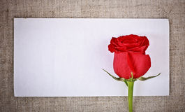Rosa e letra vermelhas fotos de stock royalty free