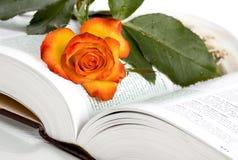 Rosa e libro immagini stock