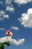 A rosa e o céu fotos de stock royalty free