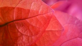 Rosa e pétalas florais roxas que formam o fundo imagem de stock