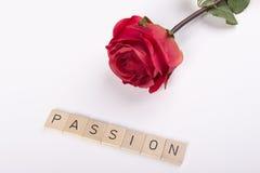 Rosa e paixão do vermelho Fotos de Stock Royalty Free