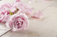 Rosa e petali sopra fondo di legno Fotografia Stock