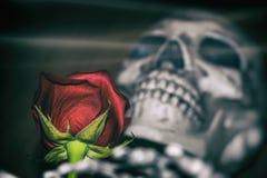 Rosa e scheletro Fotografia Stock Libera da Diritti