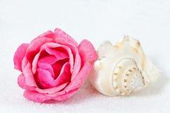 Rosa e Seashell Fotografie Stock