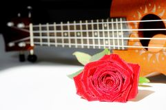 Rosa e uquelele do vermelho Fotografia de Stock