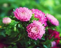 Rosa e verde Foto de Stock