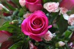 Rosa e rosa vermelha a brilhante seu dia foto de stock