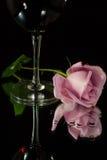 Rosa e vinho Fotografia de Stock