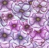 Rosa e Violet Flowers Seamless Pattern dell'acquerello Fotografia Stock