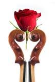 Rosa e violino Fotografie Stock